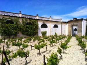 Albariza & Palomino Fino Vines